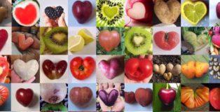 Ugly Fruit & Veg Campaign
