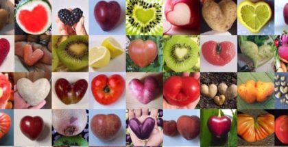 Ugly Fruit & Veg Campaign